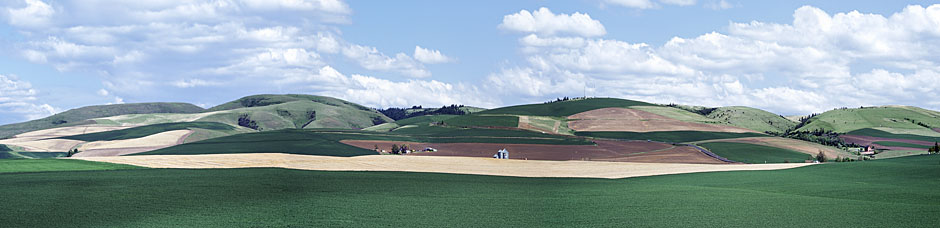 Rolling hills of Athena photograph; an Oregon farm panorama taken near Weston, NE of Pendleton; Oregon Palouse picture peas wheat
