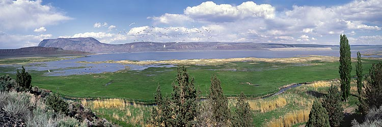 Oregon Basin Range panorama; Freshwater Crump Lake by Adel; egret, migratory ducks picture off Adel-Plush Highway for framed photo or canvas