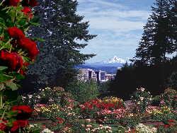 portland rose garden mt hood red flower - Portland Rose Garden