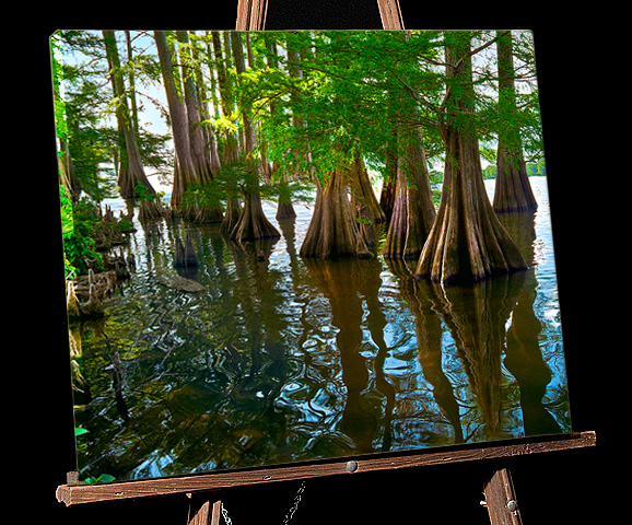 Lousiana Bayou Painting;Cypress Trees in Lake Providence with Alligator