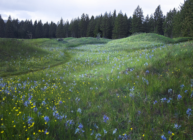 Puget Sound photographs - Mima Mounds Natural Area Preserve - gophers or vegetation caused?